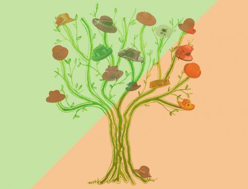 chapeau-coachingplus-hoedenboom